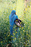 Woman in Blue Sari in Mustard Field Near Udaipur