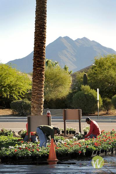 Sheridan Desert Oasis. Landscapers planting geranium.