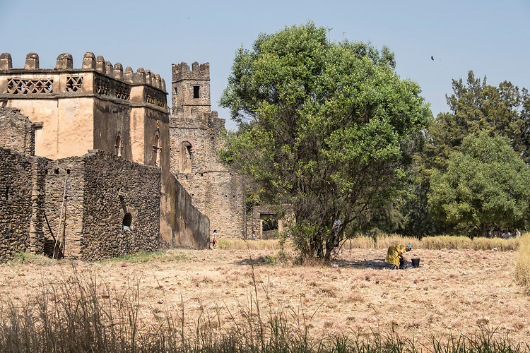 Due to the very spacious Royal Enclosure containing Gondar's six castles, there exists many locations with open courtyards and bare land from which hay is harvested.