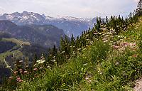 Blumen auf dem Jenner - Berchtesgaden 17.07.2019: Fahrt auf den Jenner