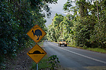 """Cape Tribulation cassowary sign vandalised to a """"roadkill"""" before and after sign."""