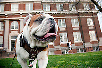 Bully Champ at Carpenter Hall--Engineering building.<br />