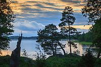 Tallar vid Kalvfjärden i Tyresö-Brevik Stockholms skärgård
