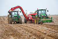 Harvesting King Edwards potatoes direct into boxes - Lincolnshire, October