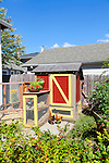 urban chicken coop with chickens and a rabbit