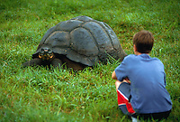 Boy watching a giant tortoise.