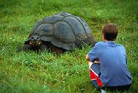 Boy watching a giant tortoise.