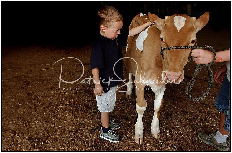 A young boy inspects a cow at a county fair. Model released photo may be used for illustrative purposes.