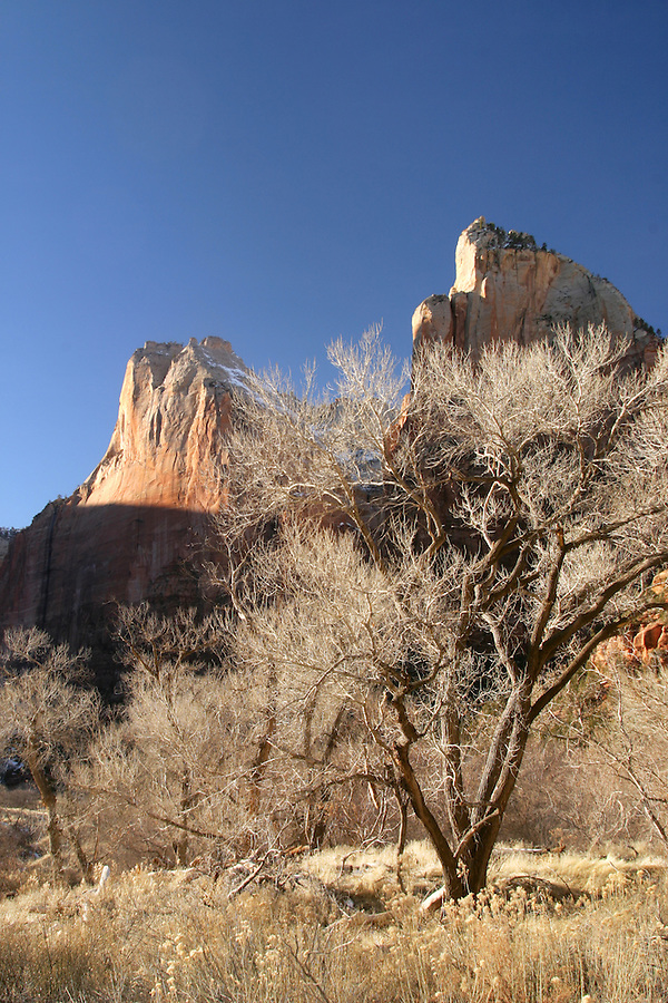 Cliffs of Abraham Mountain and Isaac Mountain above cottonwood trees, Zion National Park, Washington County, UT