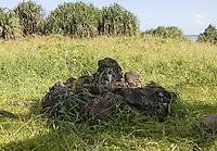Sacred stones in the Haleakala National Park, Kipahulu, Maui