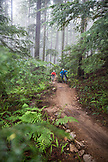 CANADA, Vancouver, British Columbia, Andrew Baker and Jordi Morros mountain bike through the rainforest in the fog in North Vancouver