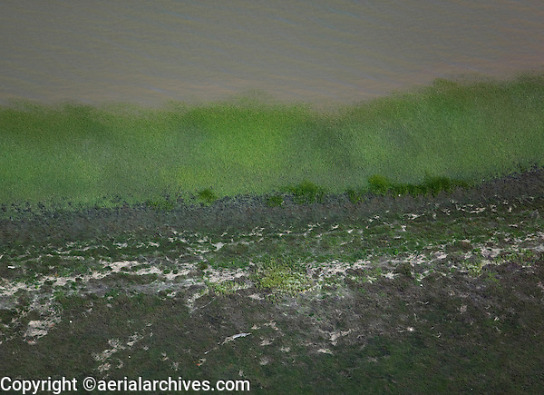 aerial view above cordgrass spartina at edge of San Francisco bay California