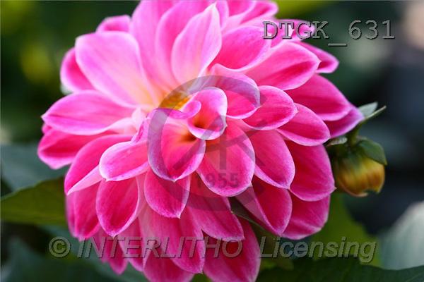 Gisela, FLOWERS, photos(DTGK631,#F#) Blumen, flores, retrato