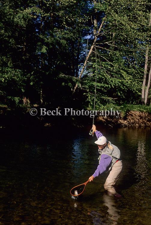 landing a trout on Kettle Creek, PA