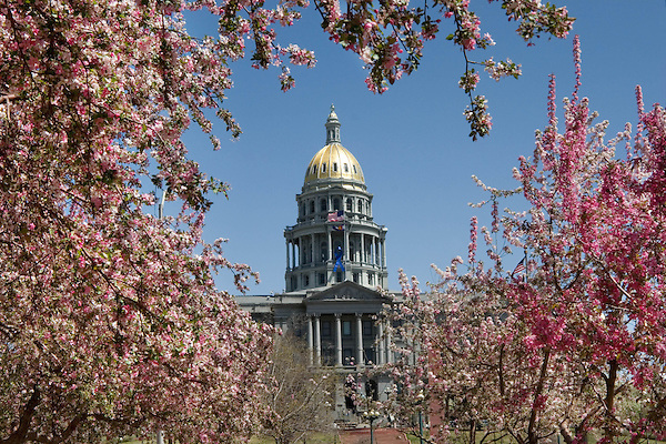 Flowering Trees and the Colorado State Capitol in Civic Center Park in Denver, Colorado. .  John offers private photo tours in Denver, Boulder and throughout Colorado. Year-round Colorado photo tours.