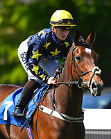 Point in Time ridden by Holly Doyle goes down to the start of The Smith & Williamson British EBF Fillies' Handicap (Class 3)  during Afternoon Racing at Salisbury Racecourse on 17th May 2018