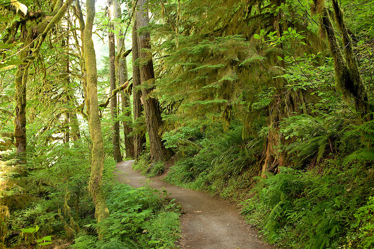 The rainforest and lush green gorge of Eagle Creek is located near the Columbia River Gorge of Oregon