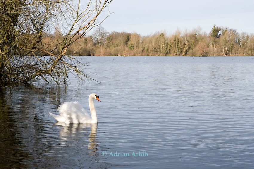 Thrupp lake, part of the Radley lakes and  the one threatened to be filled up with fly ash from Didcot power station run by RWE N power