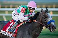 HALLANDALE, FL JANUARY 28: Arrogate #1, ridden by (Mike E. Smith), comes around the final turn for home, and wins the $12,000,000 Pegasus World Cup Invitational at Gulfstream Park Race Course on January 28, 2017 in Hallandale Beach, Florida. (Photo by Doug DeFelice/Eclipse Sportswire/Getty Images)