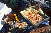 """Europe/France/Bretagne/29/Finistère/Le Guilvinec: Pêche à la langoustine sur le """"Gwenvidik"""" (AUTORISATION N°215-216-217) - Déchargement des langoustines au port"""