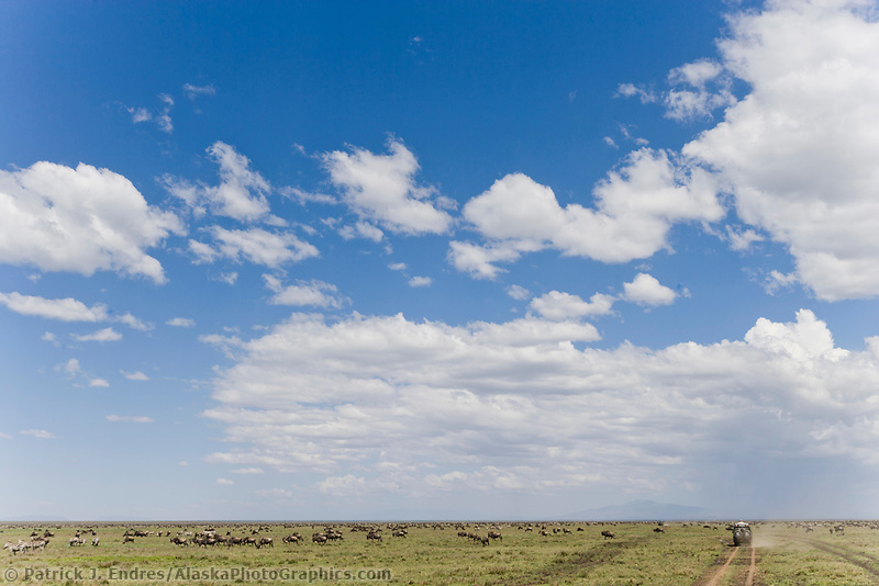 Wildebeest on the Great plains of the Serengeti National Park, Tanzania, East Africa