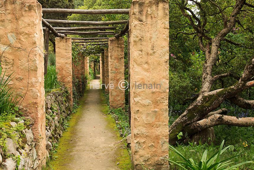 France, Alpes-Maritimes (06), Menton, jardin Serre de la Madone :.pergola avec à droite un tronc couché de Pittosporum truncatum