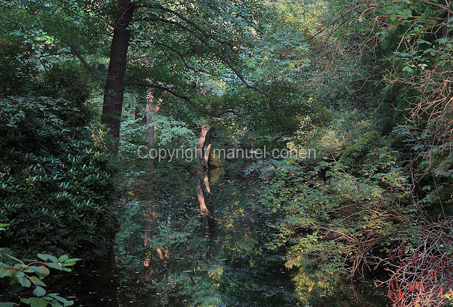 Trees reflected in a stream on the Luiseninsel, an island garden in the Grosser Tiergarten park, Mitte, Berlin, Germany. The island is named after the wife of King Frederick William III of Prussia, Queen Louise of Mecklenburg-Strelitz, who spent time here in the early 19th century. The Tiergarten is the second largest park in Berlin and third largest in Germany. Picture by Manuel Cohen