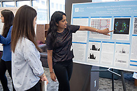 """Pulsatile Contractility Shows Functional Differentiation of Human Mammary Epithelial Cell Organoids"" by Divya Moolamalla<br /> (Mentors: Mark LaBarge and Michael Todhunter, City of Hope)<br /> Occidental College's Undergraduate Research Center hosts their annual Summer Research Conference, Aug. 1, 2018. Student researchers presented their work as either oral or poster presentations at the final conference. The program lasts 10 weeks and involves independent research in all departments.<br /> (Photo by Marc Campos, Occidental College Photographer)"