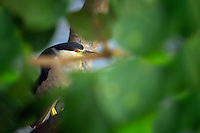 Black-crowned Night Heron. The Big Island, Hawaii.