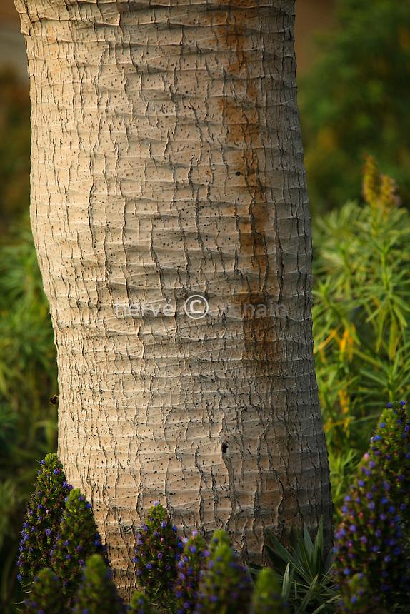 Le Domaine du Rayol:<br /> dans le jardin des Canaries, dragonnier (Dracaena draco), d&eacute;tail de la tige (stipe) et ses motifs de cicatrices foliaires.