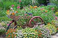 63821-22116 Old bicycle with flower basket in garden with zinnias,  Marion Co., IL