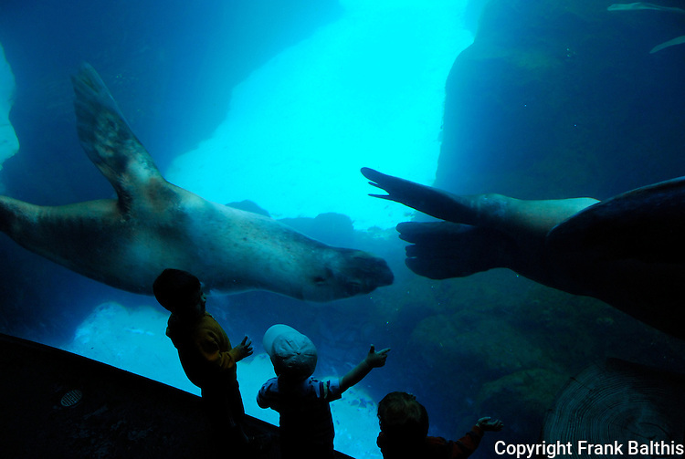 stellar sea lions at Portland Zoo