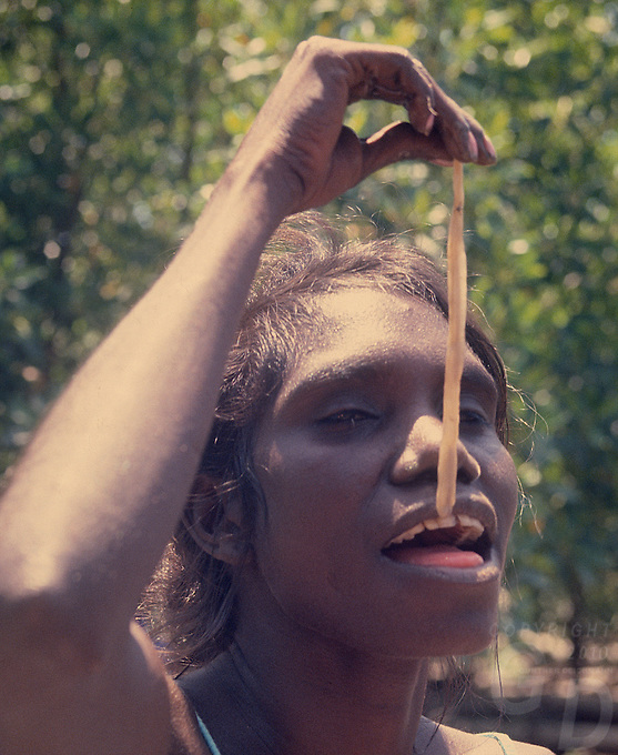 Tribal Aboriginal eating Mangrove worms, Arnhem Land Northern Territory, Australia