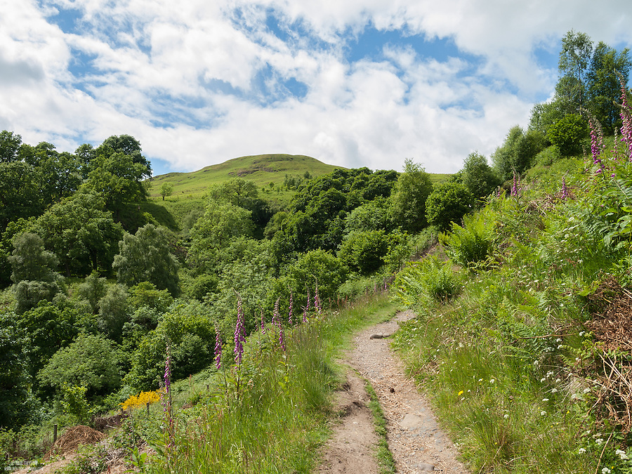 A Path Leading from Castle Campbell into the Ochil Hills, Clackmannanshire, Scotland