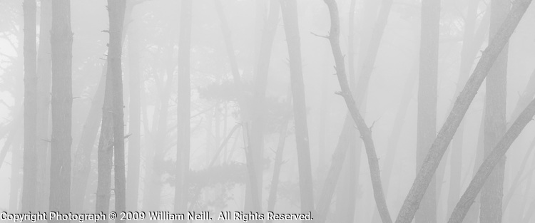Forest Fog, Monterey California, California  2009