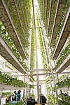 Vertical Agriculture Farming - Sky Greens Singapore