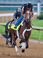 Goldencents, trained by Doug O'Neill, works out in preparation for the Kentucky Derby at Churchill Downs on April 29, 2013.