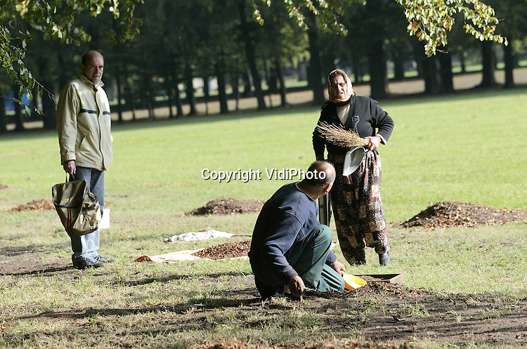 """Foto: VidiPhoto..APELDOORN - Het is een prima beukenootjesjaar. Tussen de lange beukenlanen van paleis Het Loo in Apeldoorn rapen vooral oudere allochtone vrouwen en mannen op dit moment beukenootjes om zo wat bij te verdienen. De vruchten gaan via zaadhandelaren naar boomkwekers. De bomen bij Het Loo behoren tot de zogenoemde """"geselecteerde opstanden""""; bomen van hoge genetische kwaliteit. De zaden worden gebruikt voor het telen van nieuwe beuken voor bosplantsoenen in binnen- en buitenland."""
