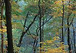 autumn trees, Bixby State Park and Preserve, Clayton County, Iowa