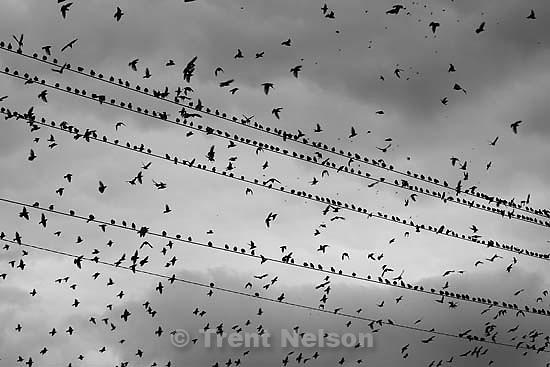 birds<br />