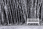 Black and white image of bench near bamboo grove