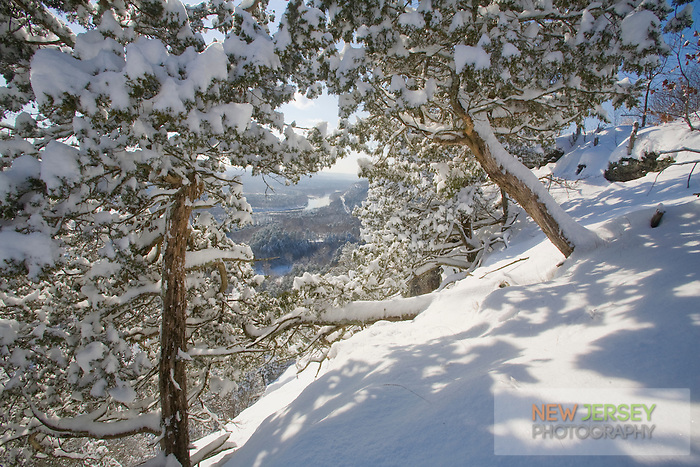 Snow covered cedar trees overlooking the Delaware River and valley, National Recreation Area, Delaware Water Gap, New Jersey.
