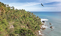 Palm trees at the Mirador de la Ballenas, a viewpoint at Punta Balandra, near Samana, in the Dominican Republic, in the Caribbean. At this point on the coast there is an observatory. Picture by Manuel Cohen
