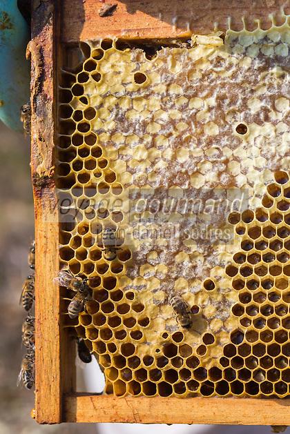 France, Aude (11), Montséret: La Miellerie des Clauses , Retrait des cadres de la ruche //France, Aude, Montseret, Miellerie des Clauses , Beekeeper removing frames from the hive