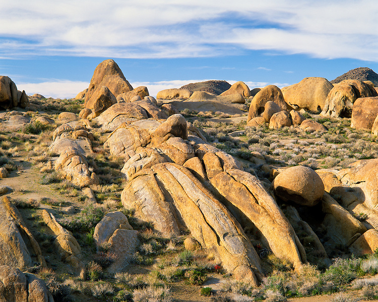 """Alabama Hills Recreation Area (protected habitat), managed by the BLM, a """"range of hills"""" and rock formations near the eastern slope of the Sierra Nevada Mountains in the Owens Valley. Orange, drab weathered metamorphosed volcanic rock that is 150-200 million years old and 90 million year old granite that weathers to potato-shaped large boulders, many of which stand on end due to spheroidal weathering acting on many vertical joints in the rock. Named by Confederate sympathizers after CSS Alabama sunk off coast of Normandy by USS Kearsarge in 1864. Popular location for hundreds of westerns and other films. Inyo County, CA."""