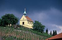 Schloss Troja bei Prag, Weinberg, Tschechien