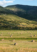 A hay field along Highway 131 near Steamboat Springs, Colorado, Wednesday, August 12, 2015. As part of the 2015 Colorado Water Plan, the North Platte River Basin has called for the use of more irrigation and farming.<br /> <br /> Photo by Matt Nager