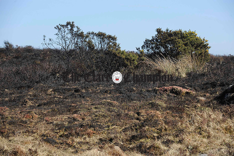 Some of the damage caused by gorse fires in the Ballinruan area on St Patrick's night. Photograph by John Kelly.
