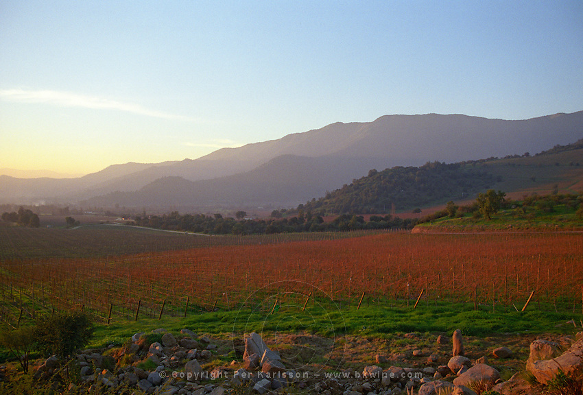 Sun setting over the vineyard with the Andes in the background., Bodega Altair in Region del Maule, Chile