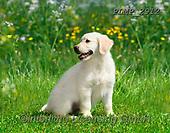 Marek, ANIMALS, REALISTISCHE TIERE, ANIMALES REALISTICOS, dogs, photos+++++,PLMP2912,#a#, EVERYDAY